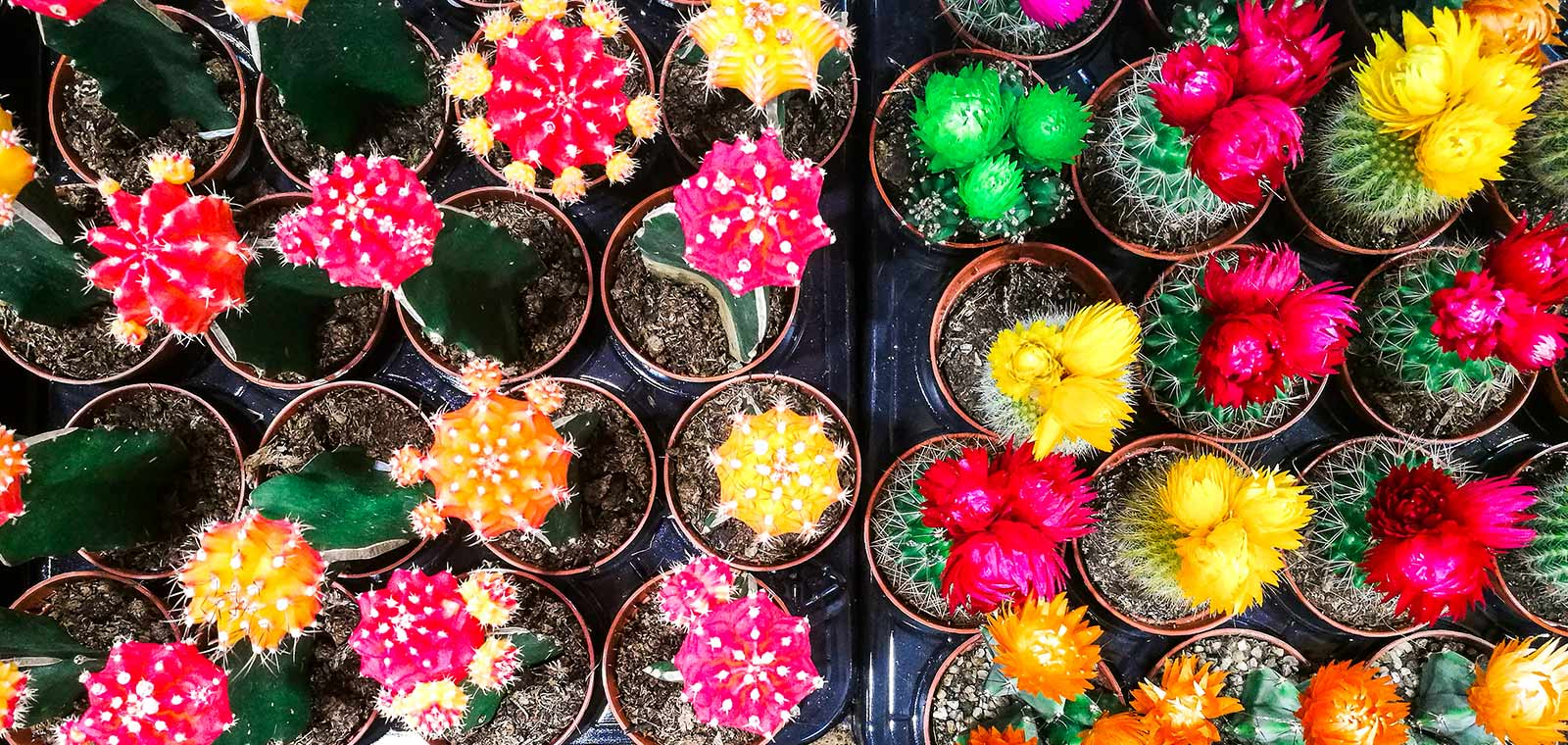 An overhead view of an array of multicolored exotic potted plants.