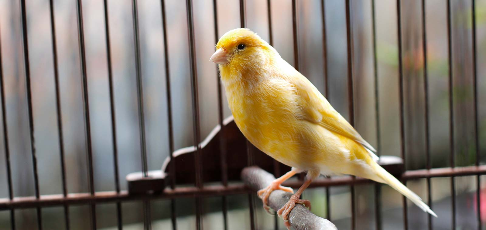 canary in the coalmine